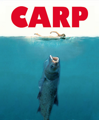 asian carp invading the great lakes essay The us army corps of engineers released a study monday on how best to keep  the invasive species asian carp from overwhelming the great.