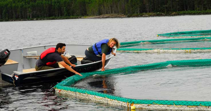 Researchers at the Experimental Lakes Area in northern Ontario.