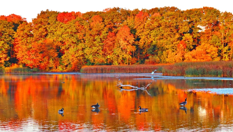 Rouge Park at Sunrise. (Flickr Photo Courtesy of Snuffy.)