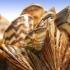 Ontario Invasive Species Act gets secondchance