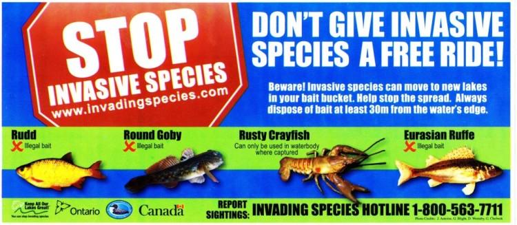 Stop-invasive-species-001-1024x447