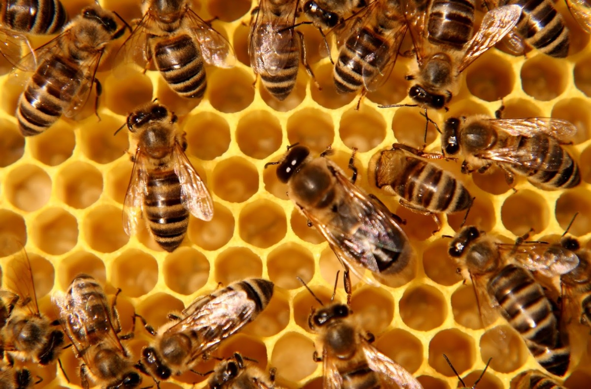 Unreleased government report shows no benefits to neonic use